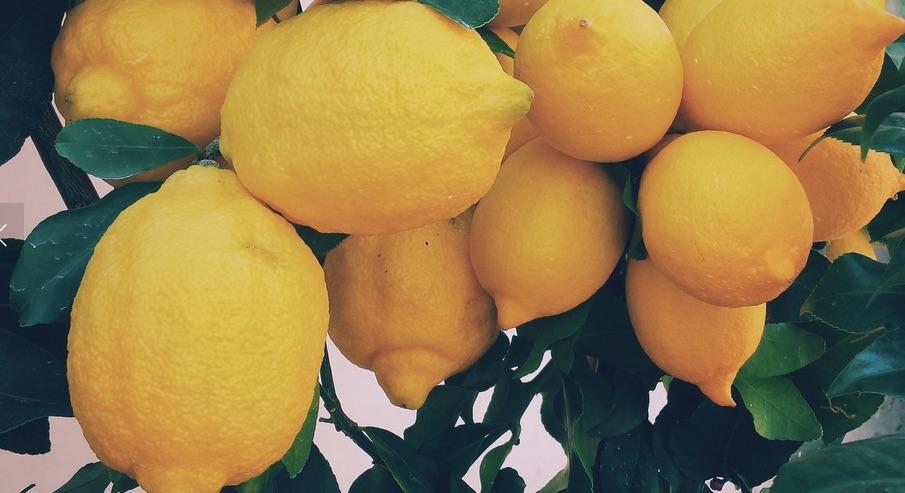 yogaresa_till_spanien_citroner