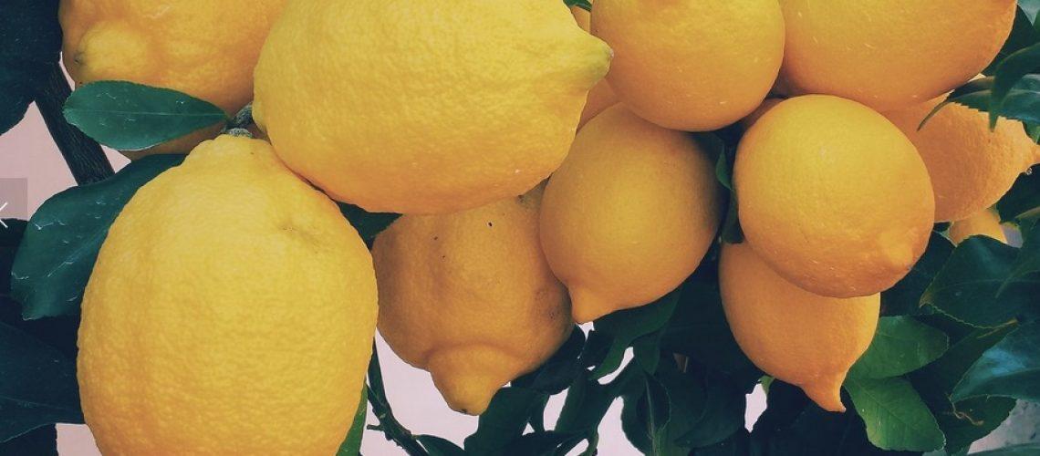 yogaresa_till_spanien_citroner-2